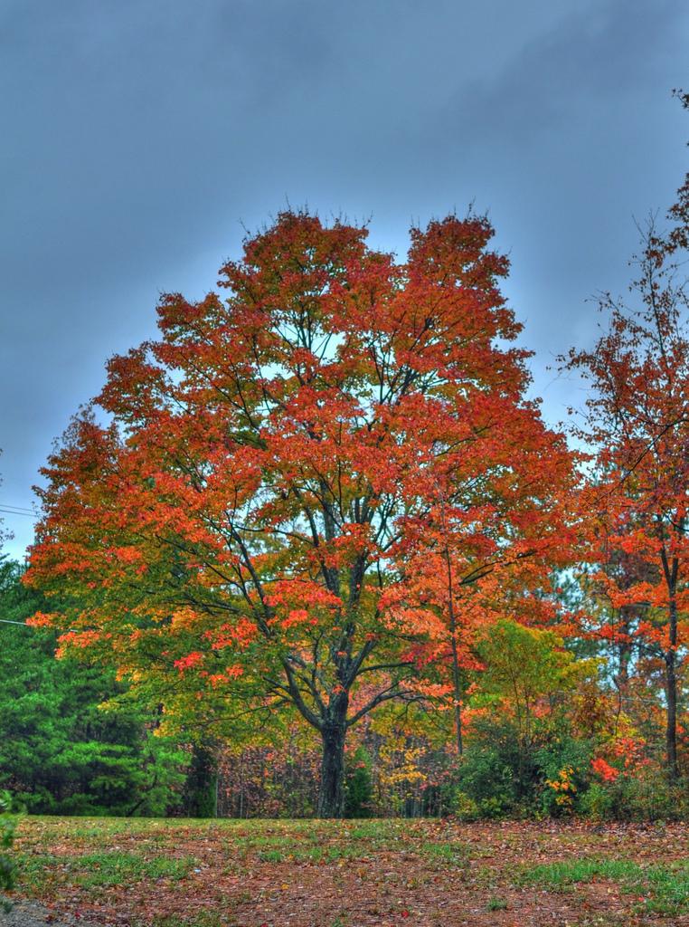 stockvault-fall-season138262